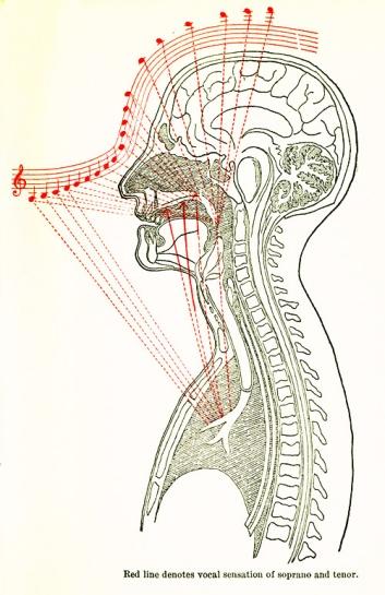 Lehmann Vocal Tract Resonance